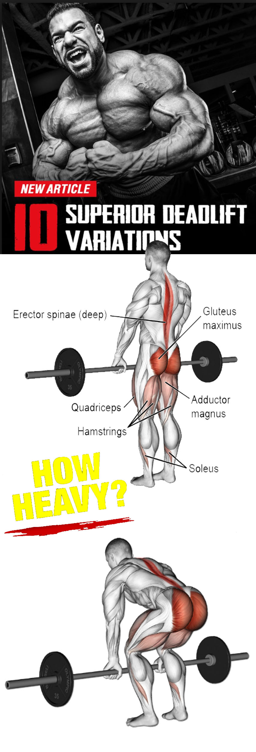 New Article Guide Deadlift