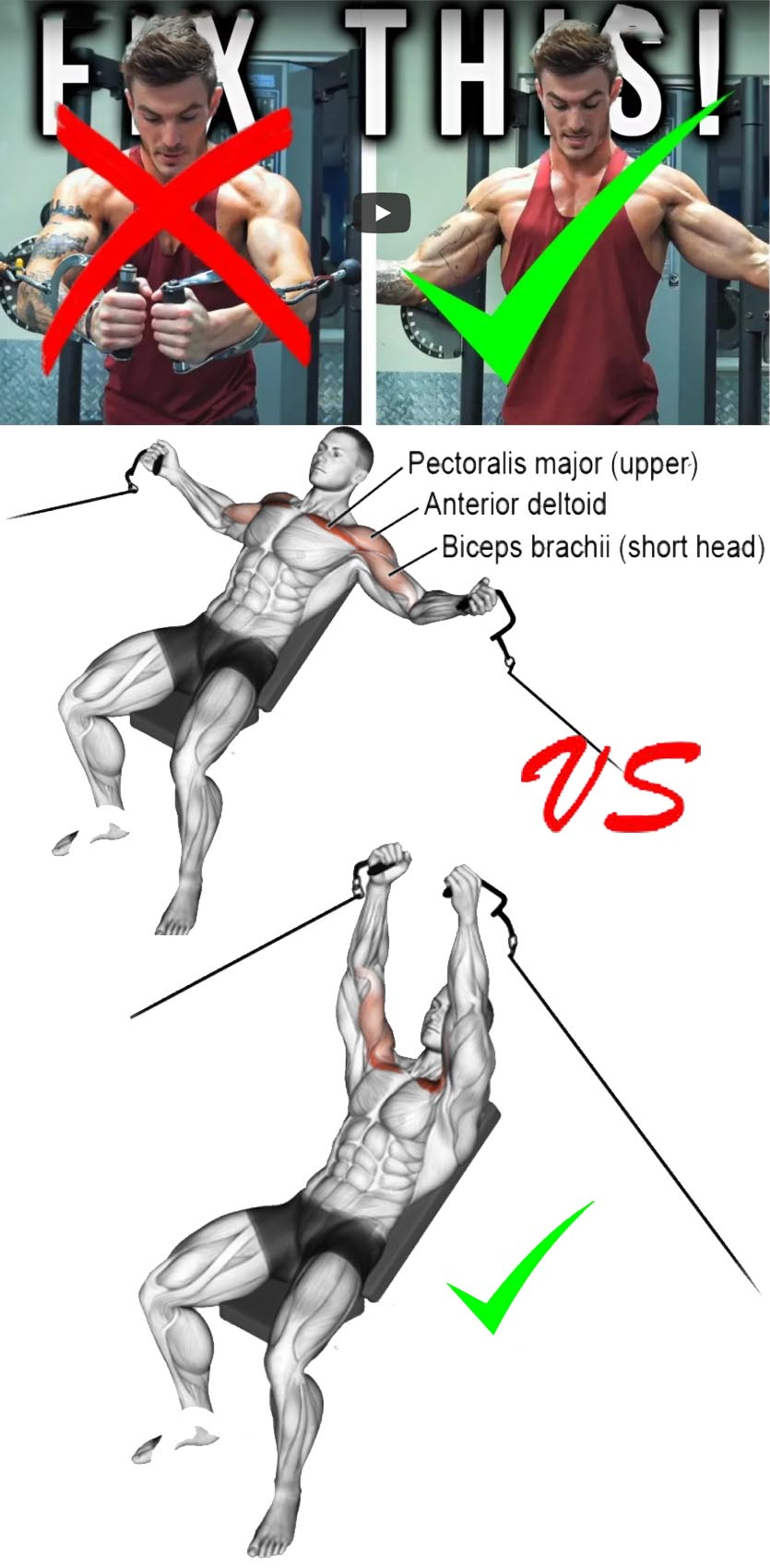 Decline cable fly VS Chest Cable Fly
