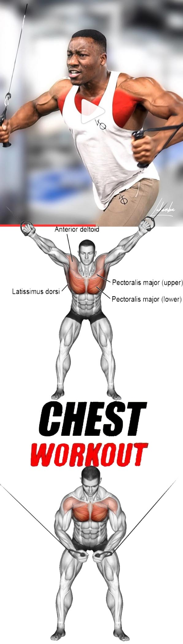 Chest Exercises Tutorial