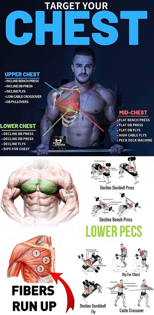 How to Chest Exercises