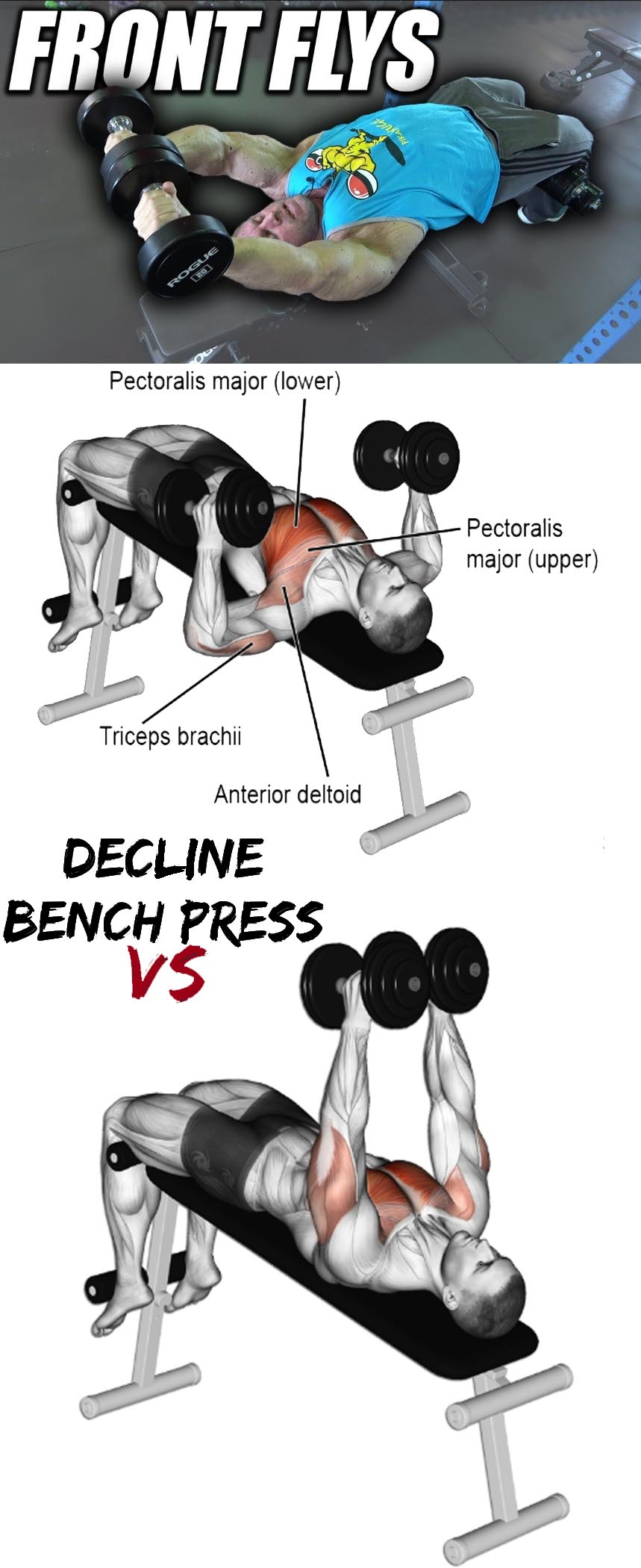 Front Flys VS Decline Bench Press