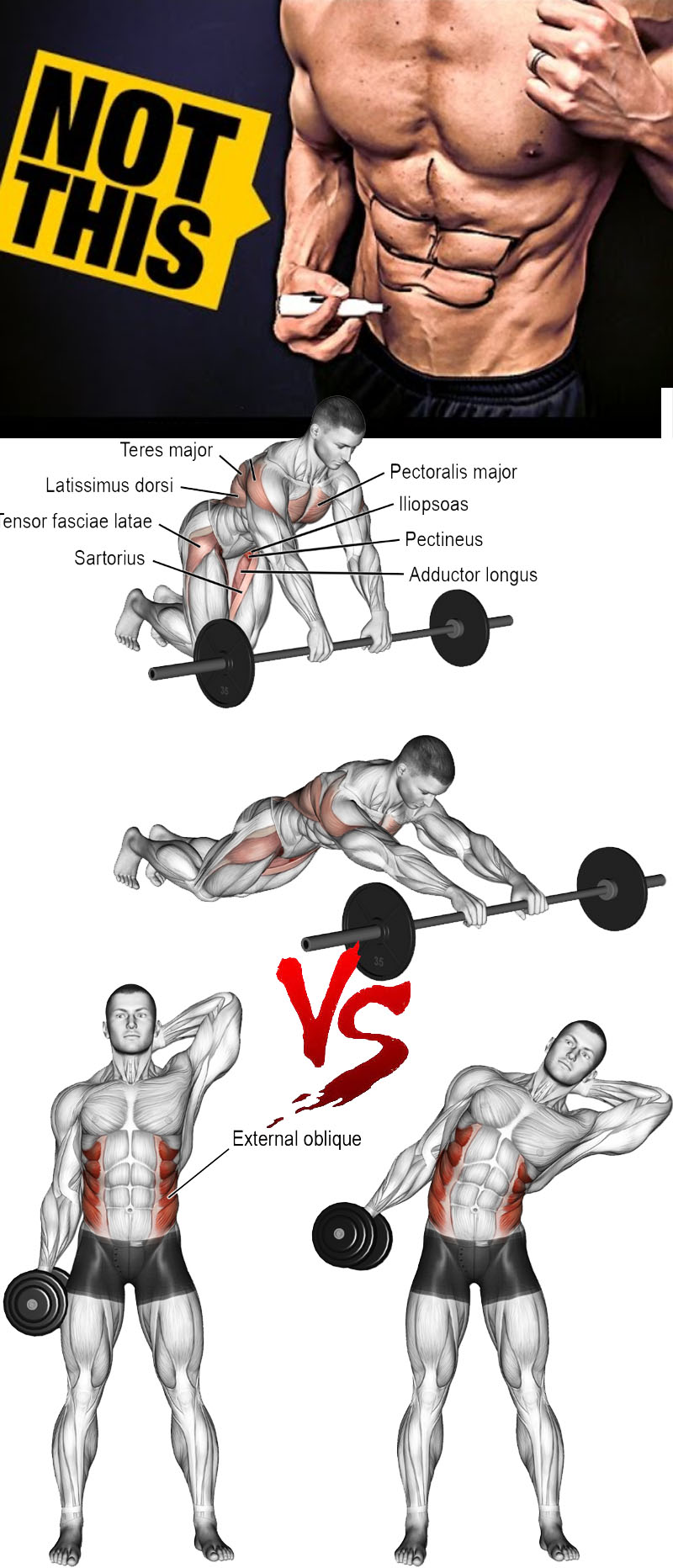 Barbell rollout VS Dumbbell side bend