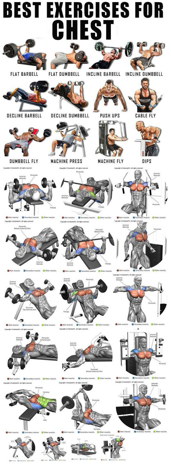 Chest Grow Exercises