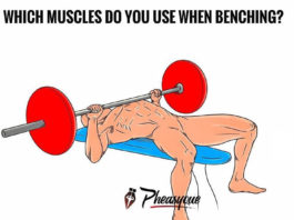 WHICH MUSCLES DO YOU ISE WHEN BENCHING