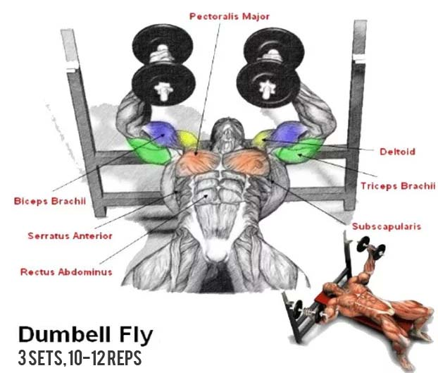 how to best dumbbell fly