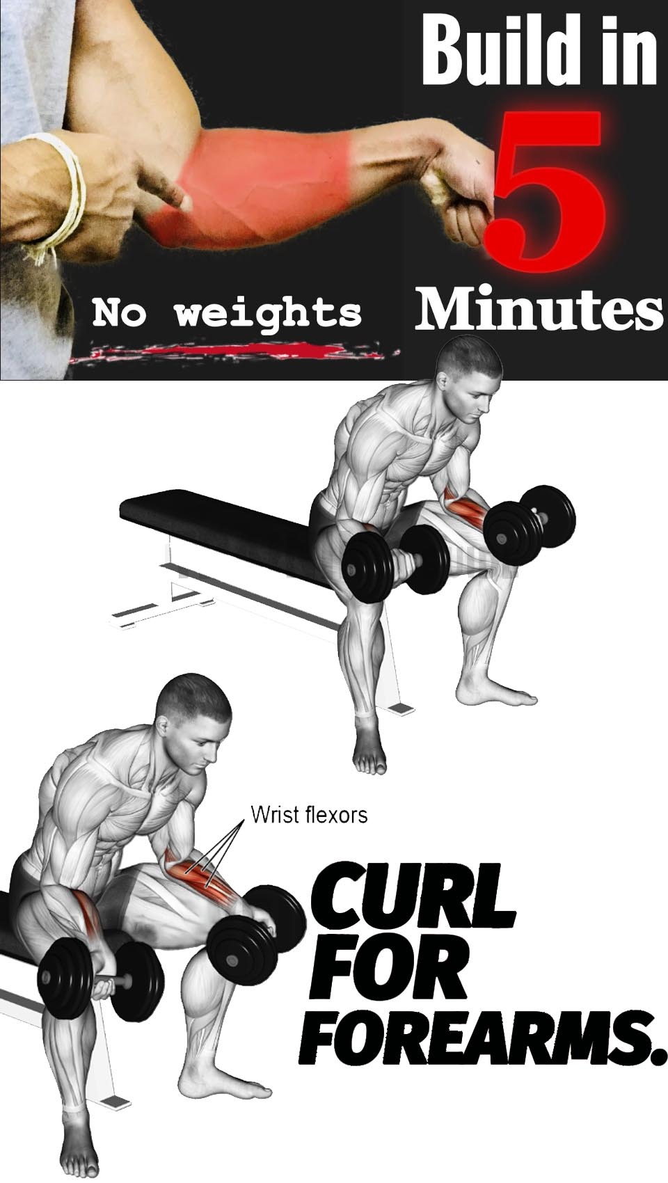 Curl Forearms