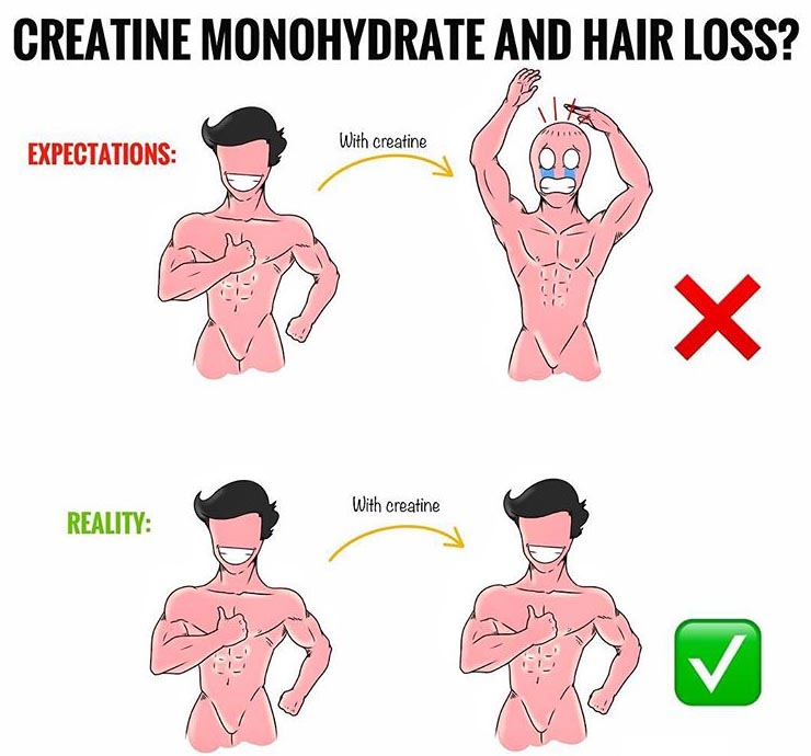 CREATINE & HAIR LOSS?
