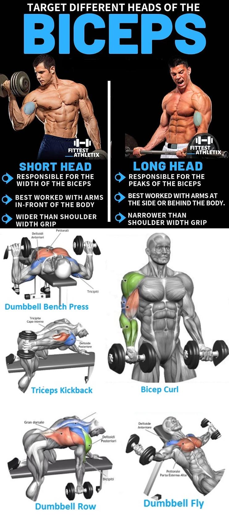 Biceps Exercises | Short Head | Long Head
