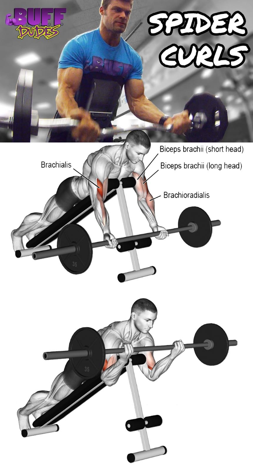 Incline Barbell Curl