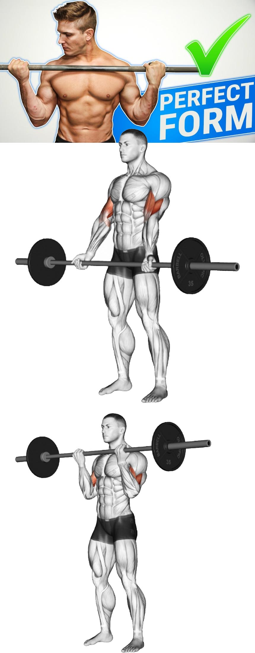 How to do Standing Barbell Curl