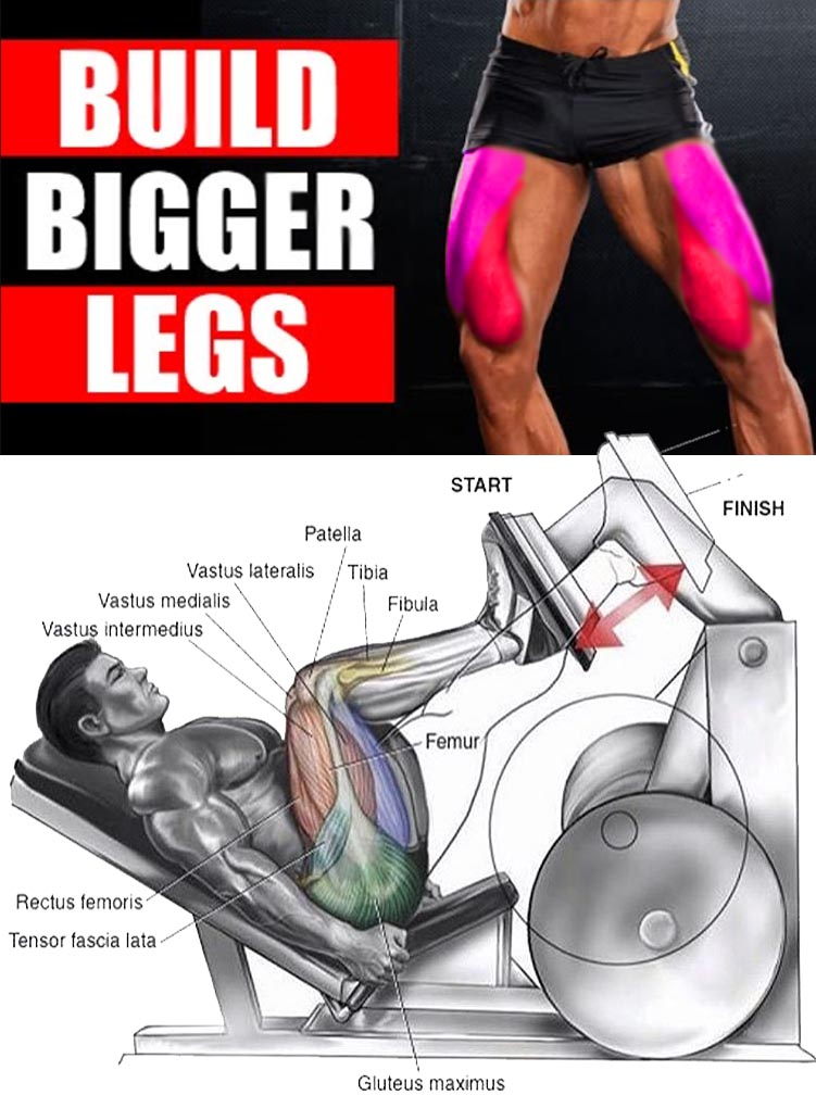 BIGGER LEGS EXERCISES