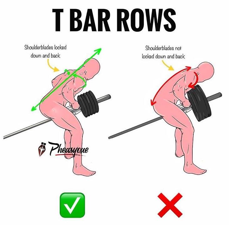 T BAR ROWS