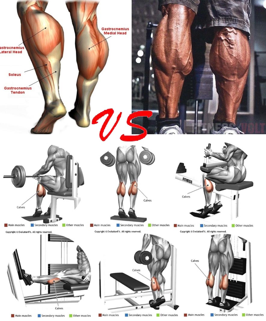How to Calf Workout