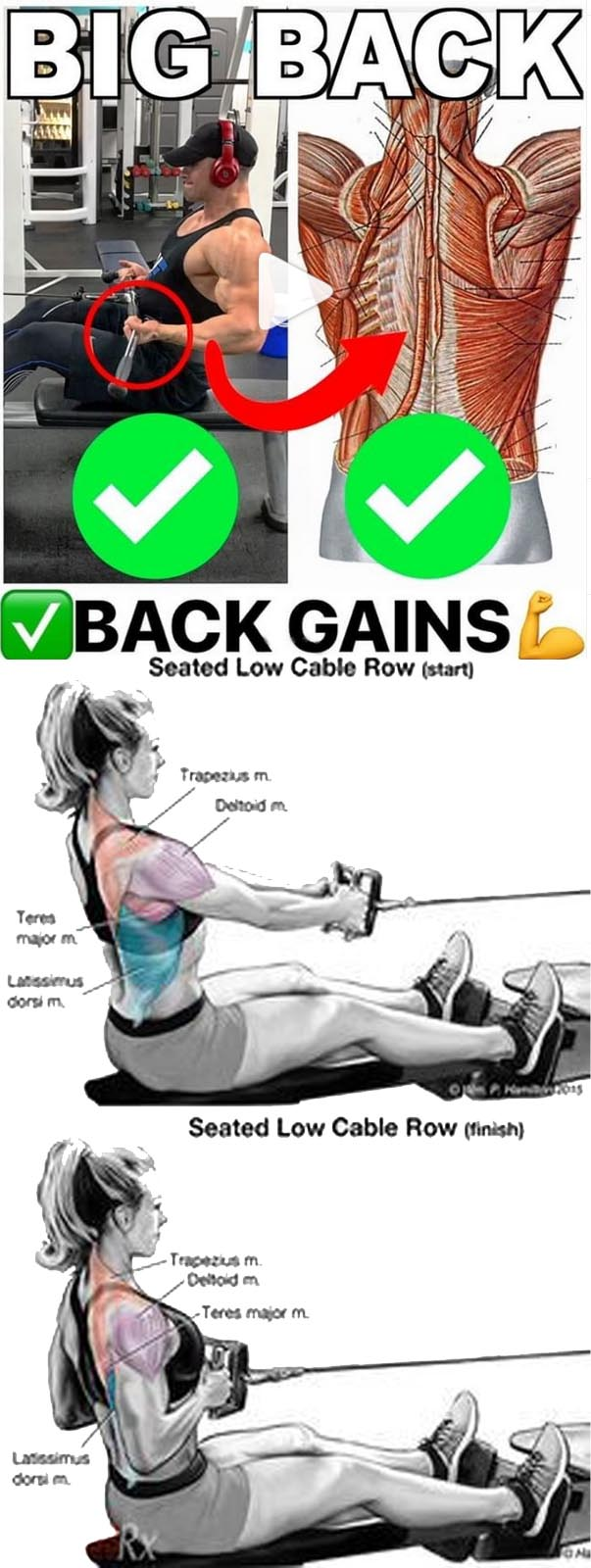 BIG BACK CABLE ROW