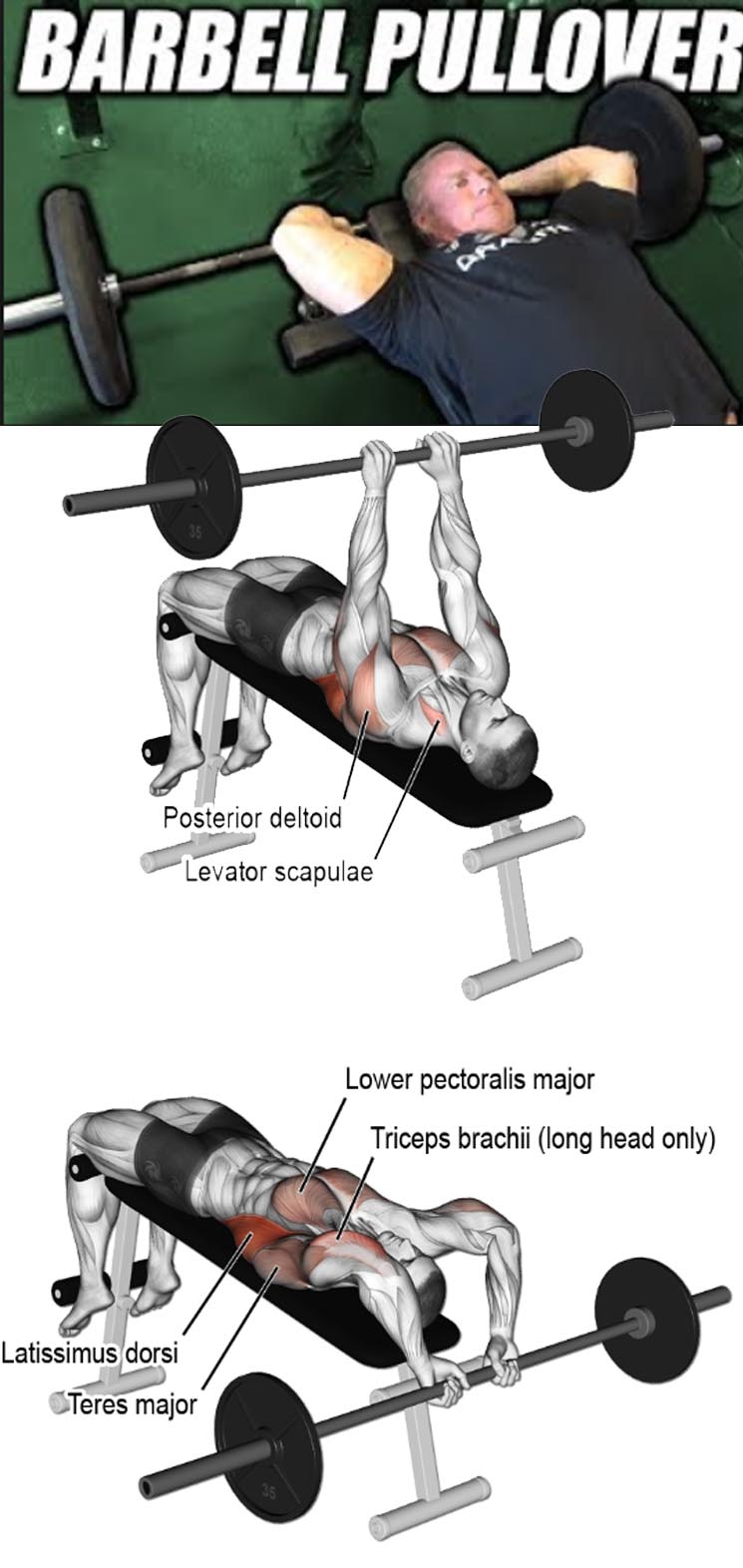 How to Barbell Pullover