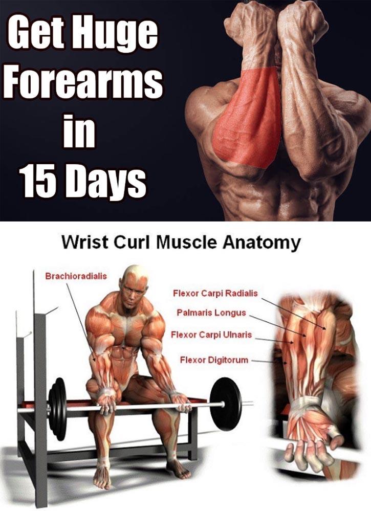 Wrist Curl Muscle