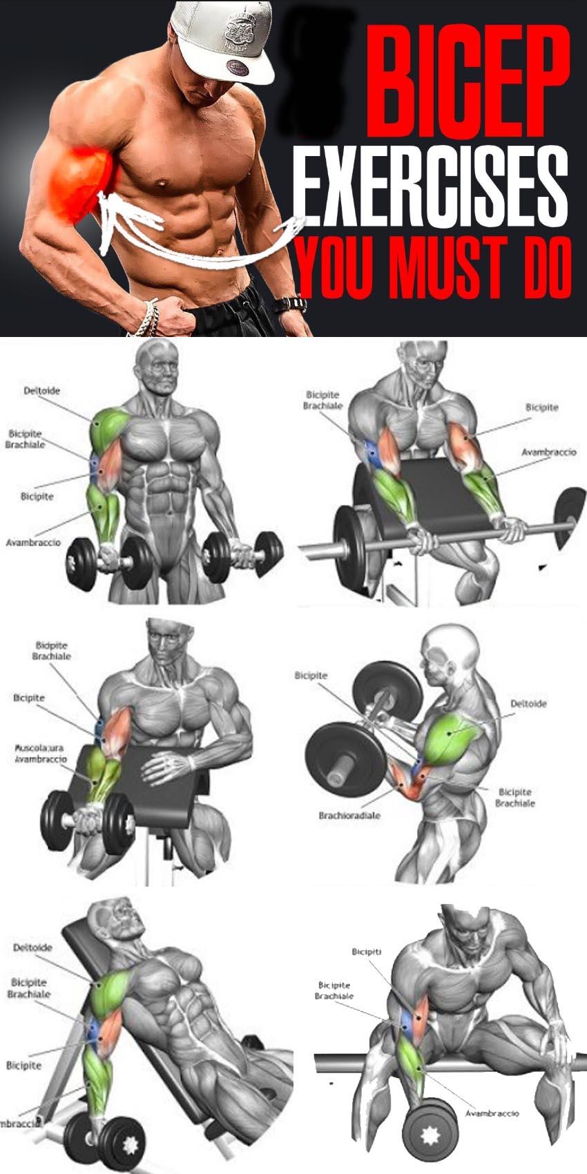 Tutorial Biceps exercises