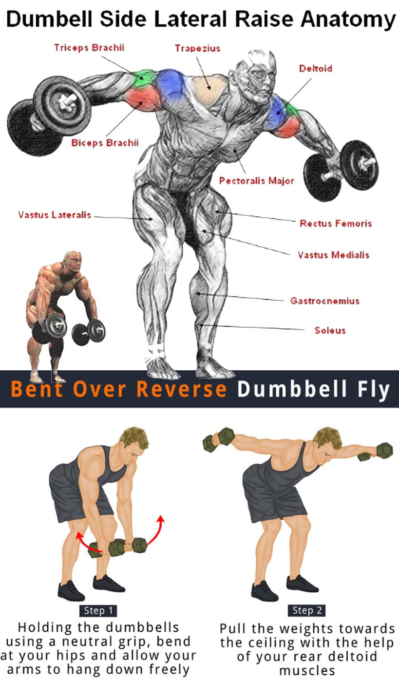 Bent Over Reverse Dumbbell Fly