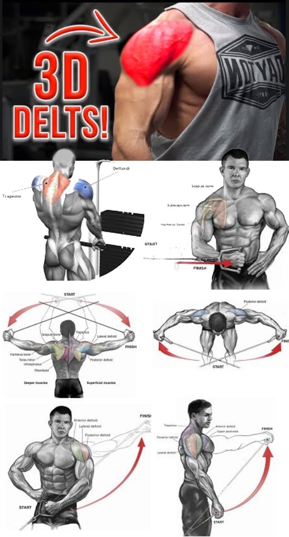 3D Delts