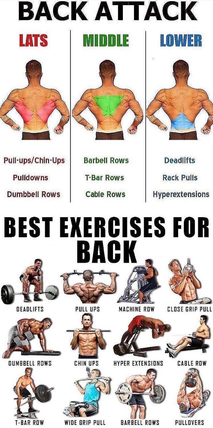 BACK EXERCISES TUTORIAL
