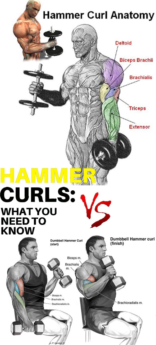 How to Hammer Curls