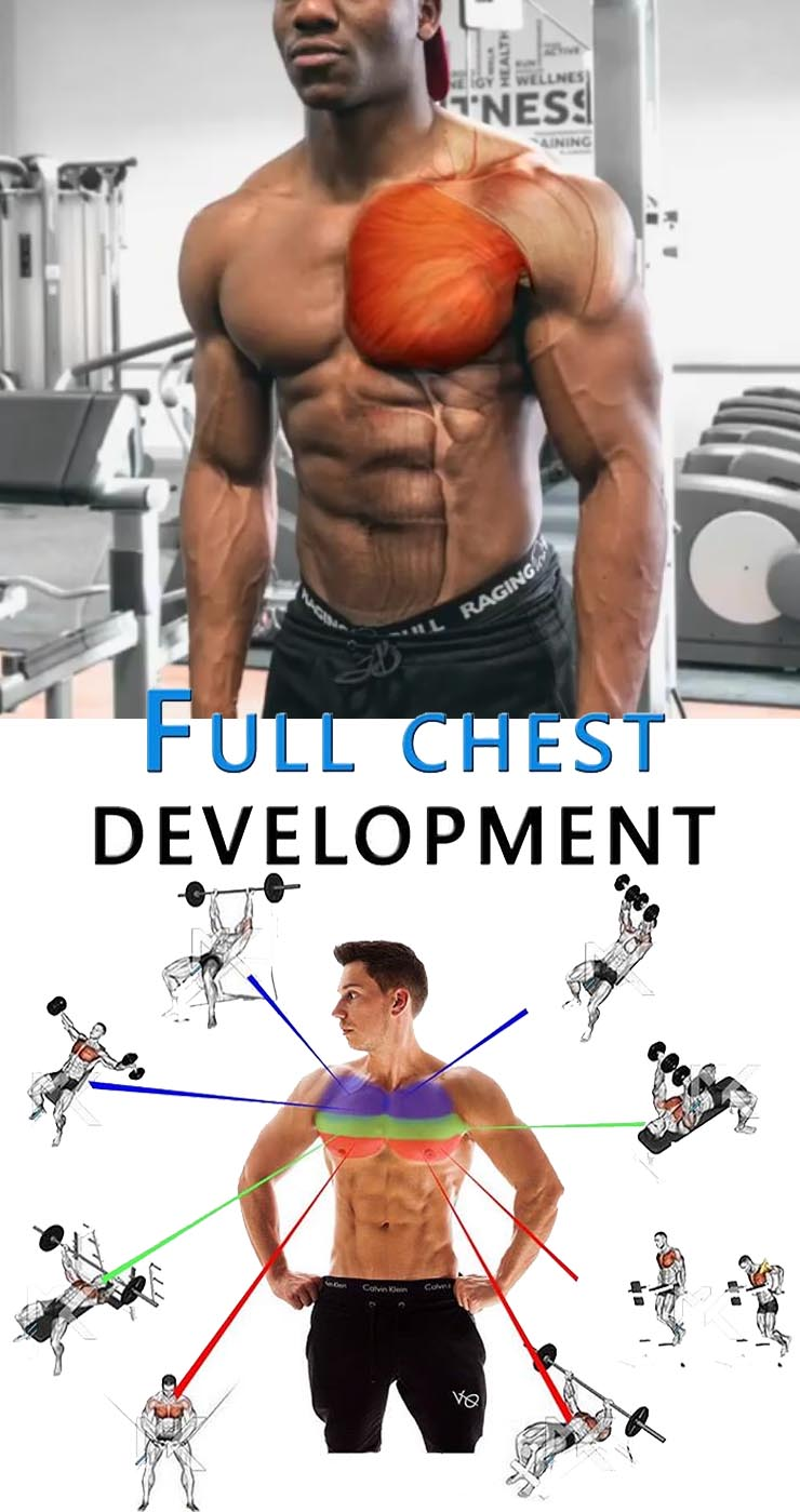 Full Chest Development