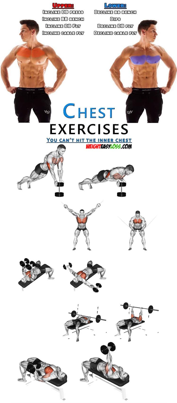 Chest Exercises & Upper - Lower Chest
