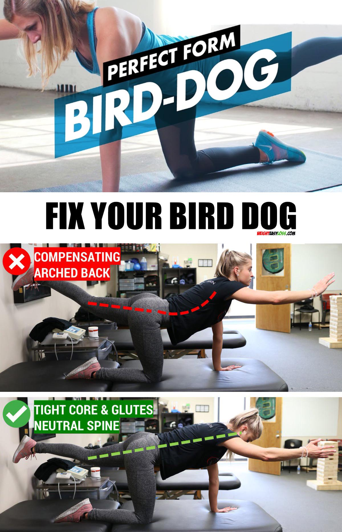 Perfect form Bird Dog
