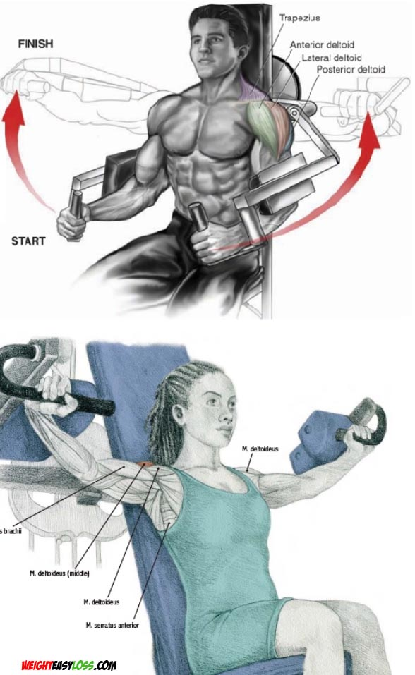 Muscles Involved in Machine Lateral Raises