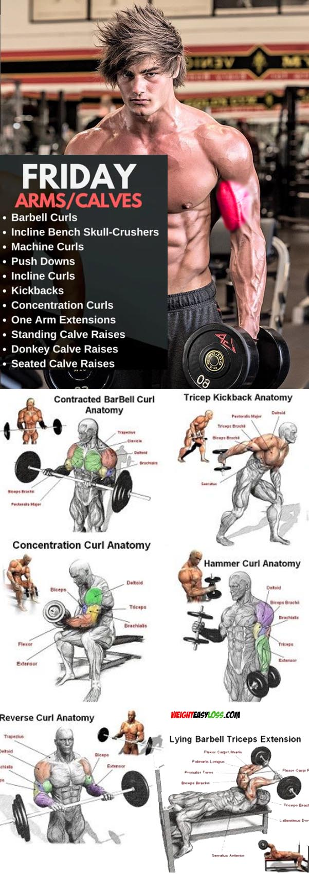 Biceps Day Exercises