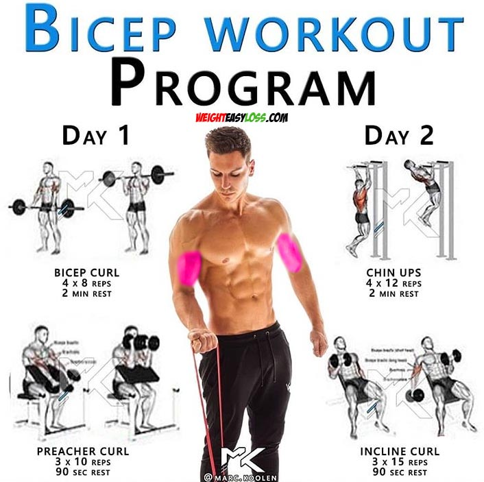 The biceps exercises