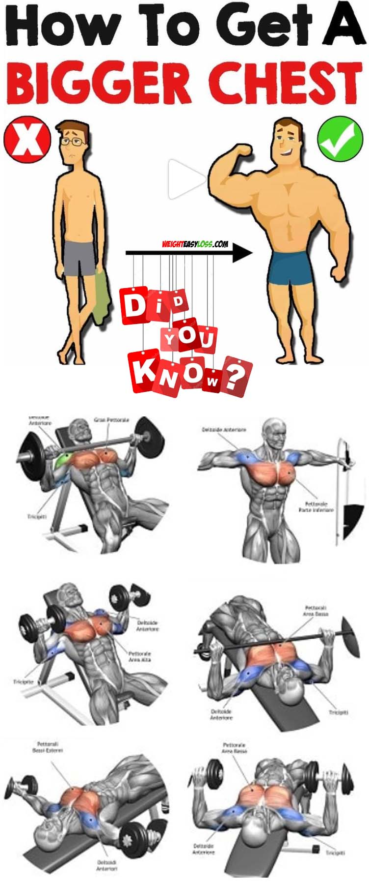 HOW TO BIGGER CHEST