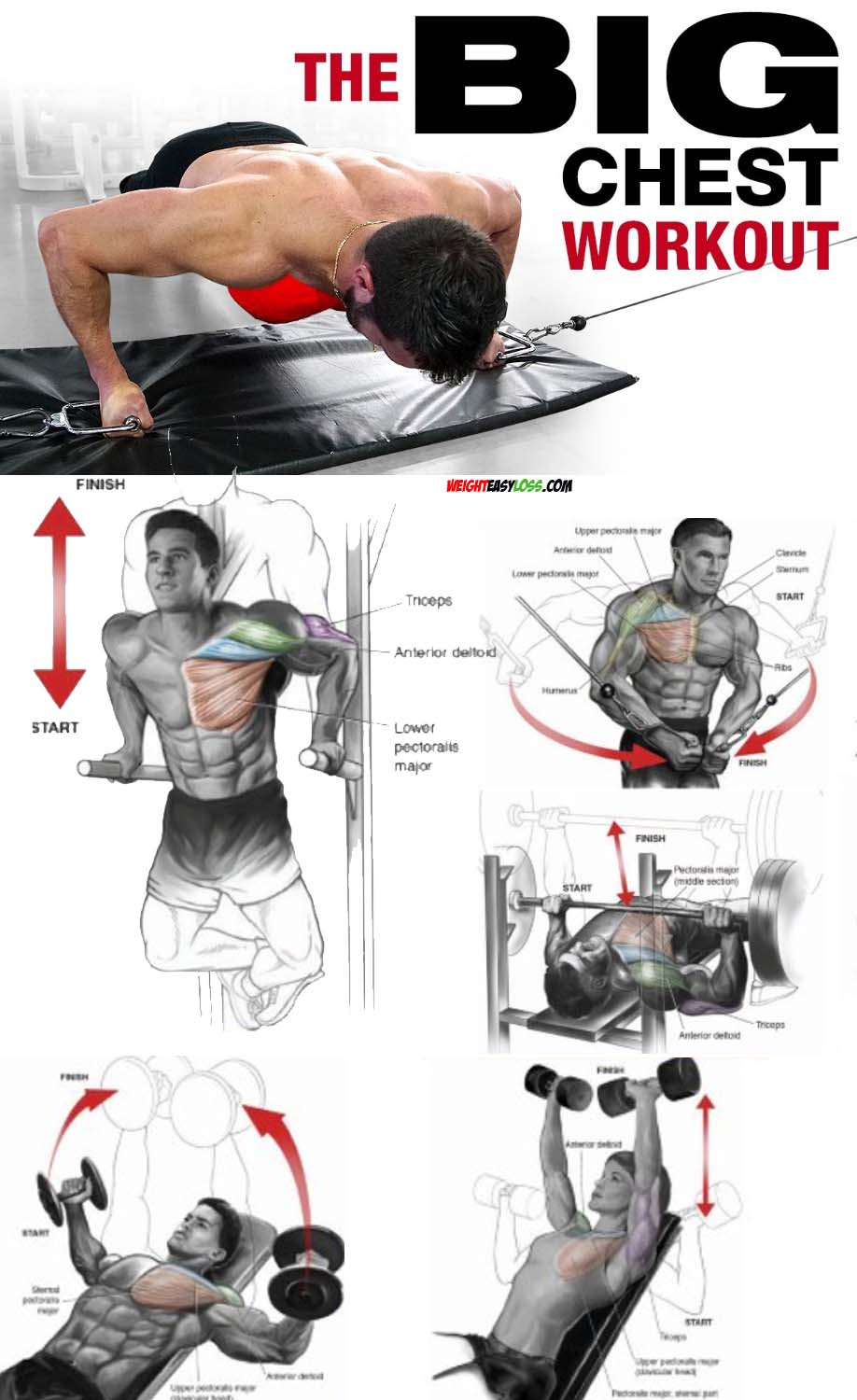 The Big Chest Workout