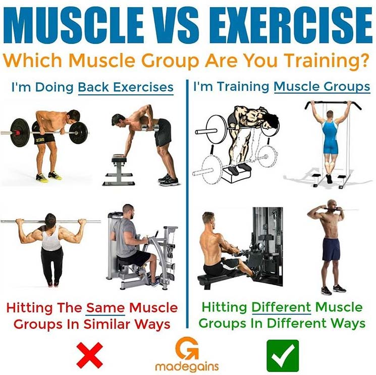 Muscle & Exercises