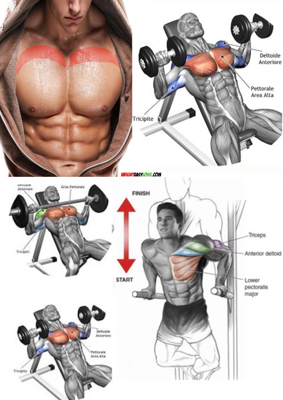 How to Chest Workout