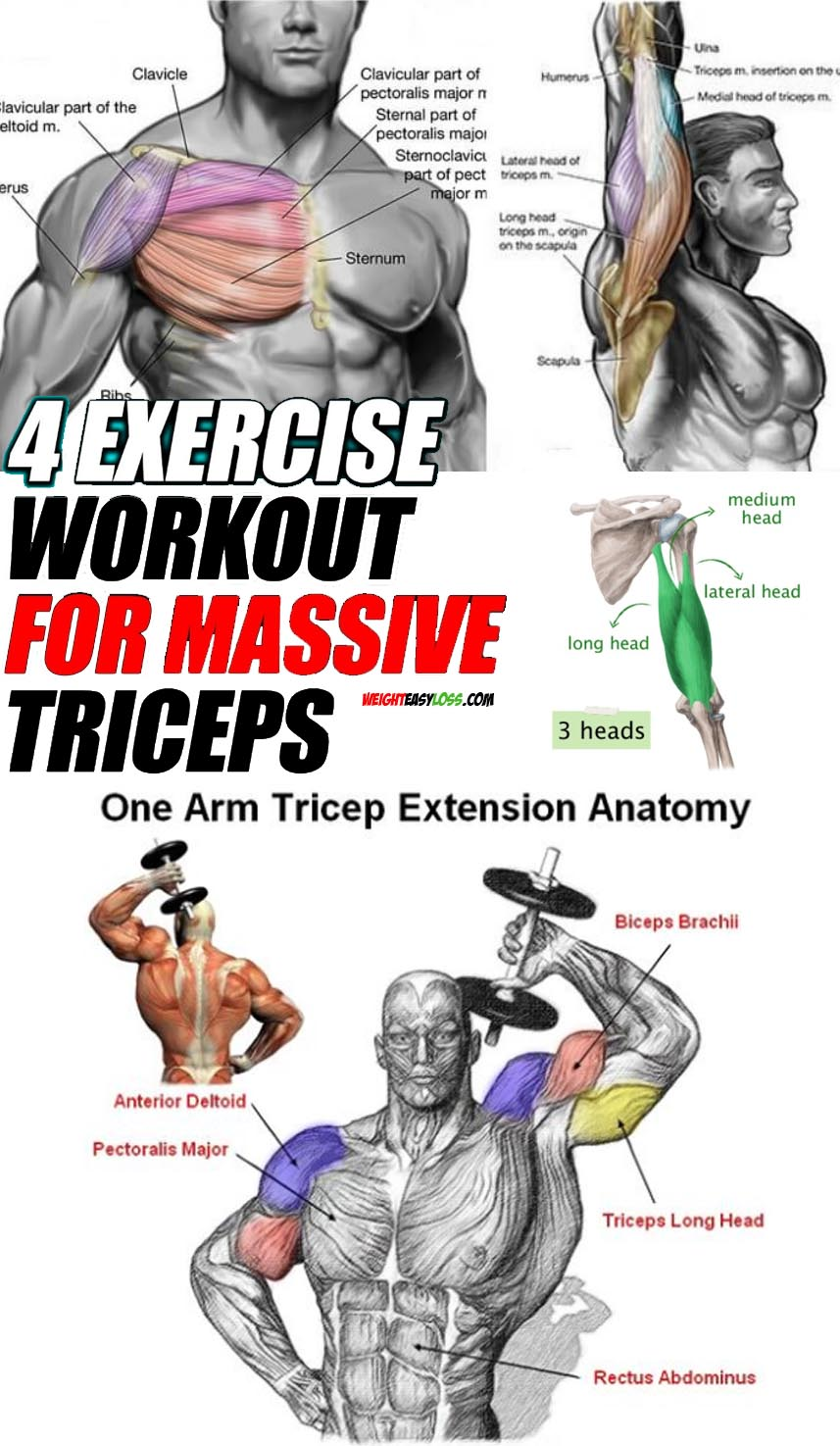 workout for massive triceps