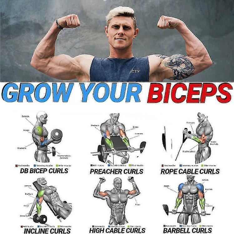 GROW YOUR BICEPS