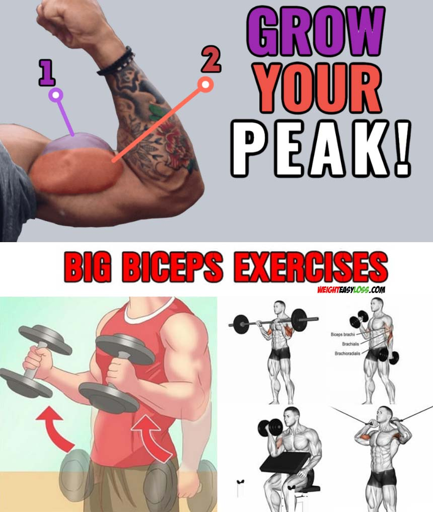 Grow Your Biceps Peak
