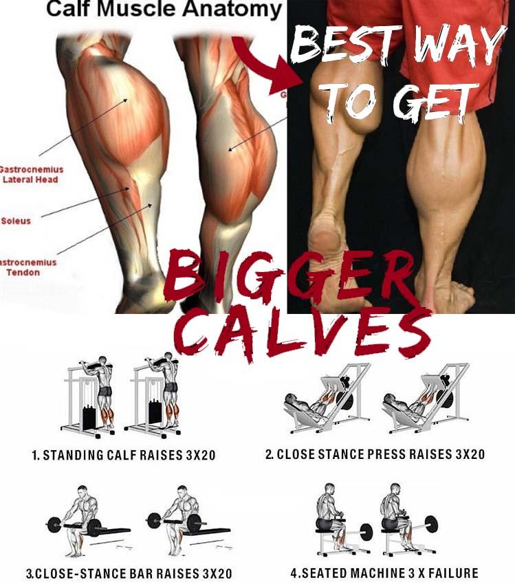 Build Calf Muscle Anatomy