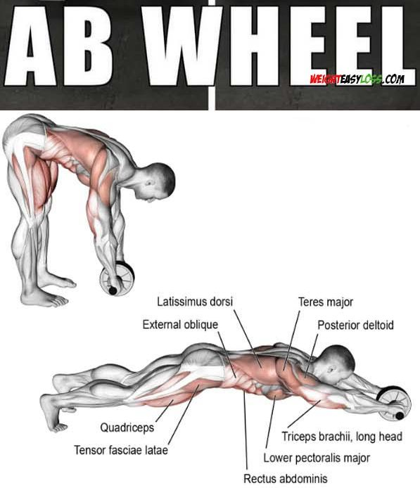 Ab Wheel Workout