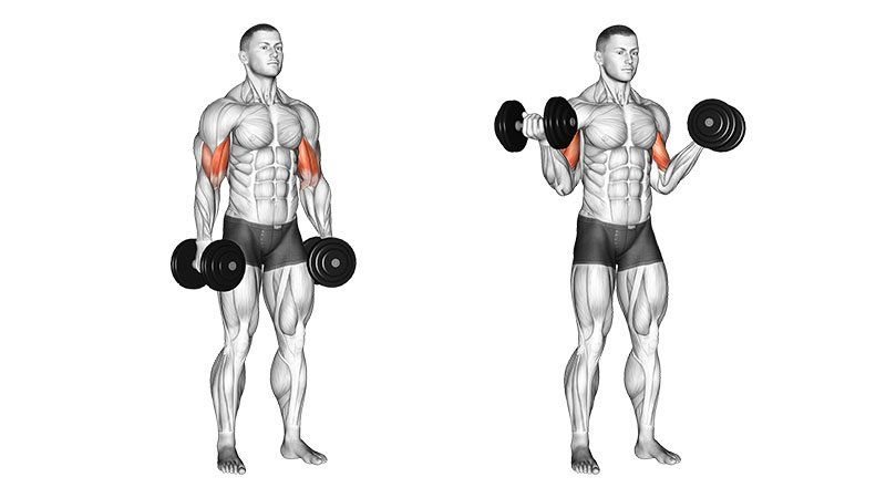 How to Do Supinated Dumbbell Curl