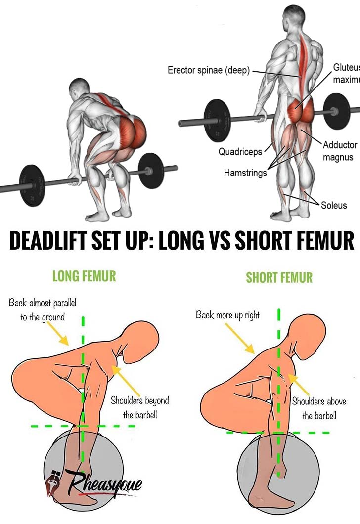 DEADLIFT SET UP: LONG & SHORT FEMUR