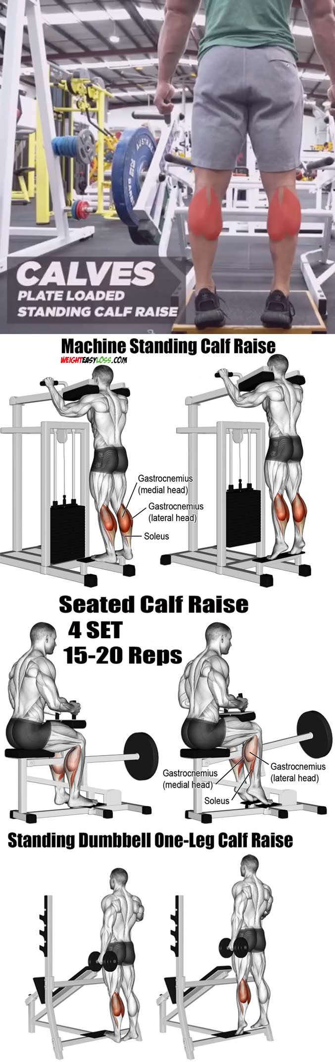 Calves Plate Loaded | Calves Exercises