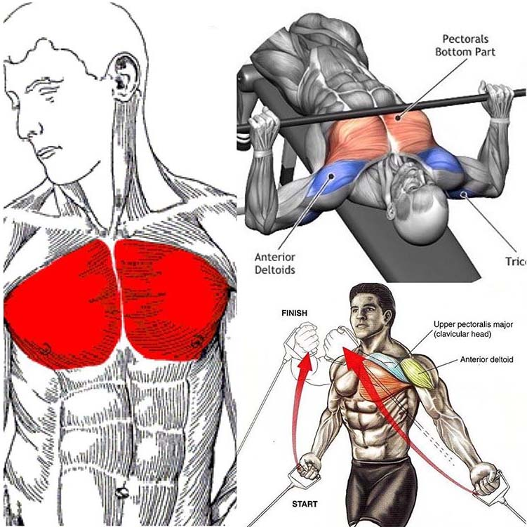 CHEST DAY EXERCISE