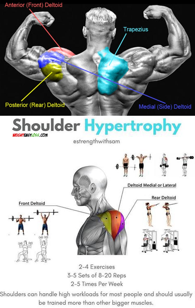 Shoulder Hypertrophy