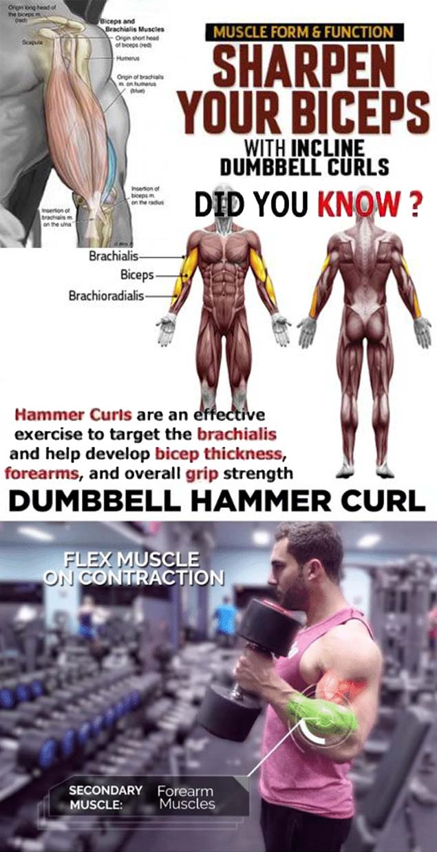 Biceps workout Tips