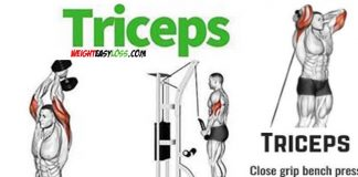 Triceps workout guide