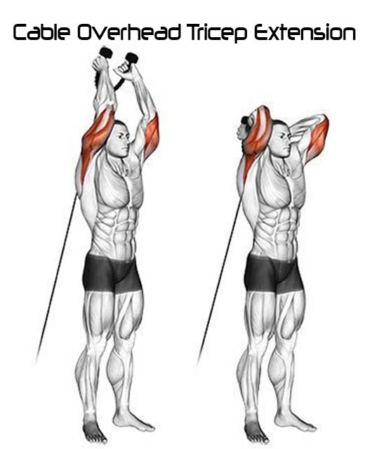 How to Do Cable Overhead Tricep Extension