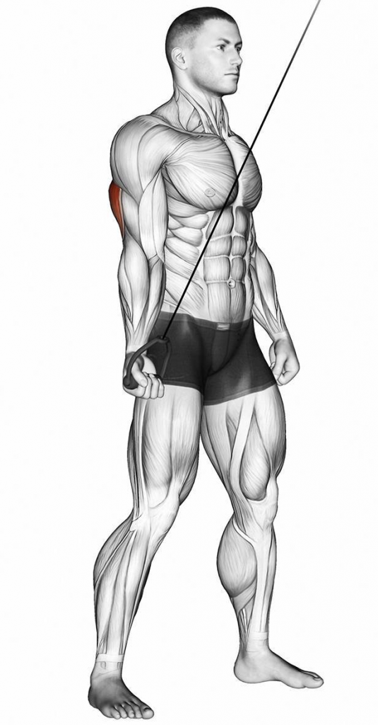 How to Cable Tricep Pushdown One Hand