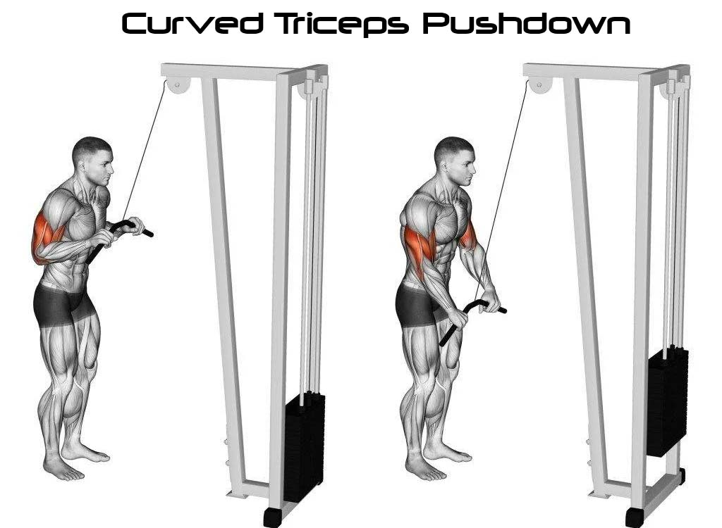 Curved Bar Tricep Push Down